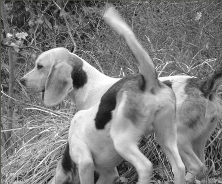Offre GEONIMO GPS Chien de chasse
