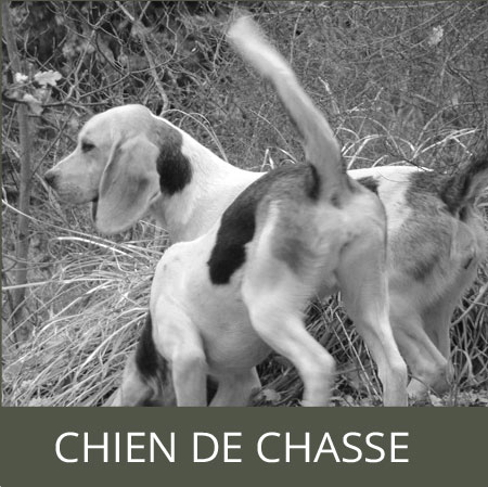 GEONIMO chasse